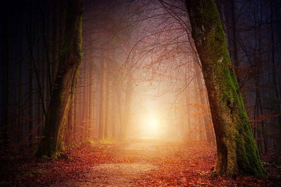 Mystical Forest - Image Collection